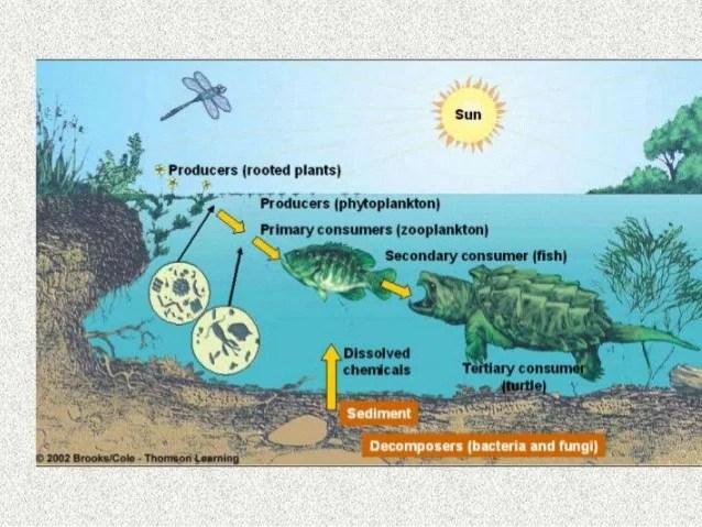Environmental, ecosystem and biodiversity
