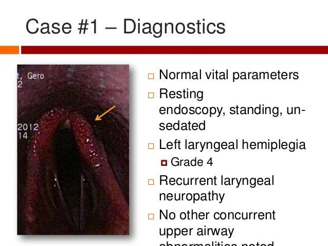 Equine Laryngeal Anatomy