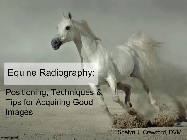 Equine radiography positioning techniques  tips for acquiring good images shalyn  crawford also rh slideshare