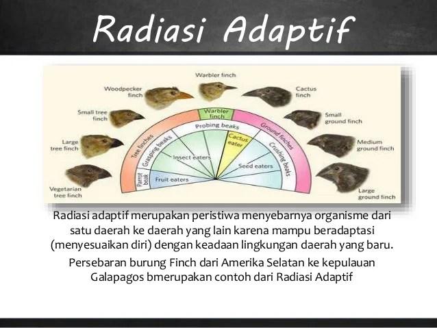 """Evolusi adalah konsep terpenting dalam biologi. Biologi """"EVOLUSI"""""""