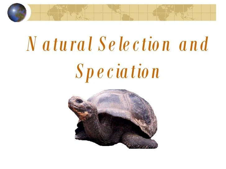 Evolution, Natural Selection, And Speciation