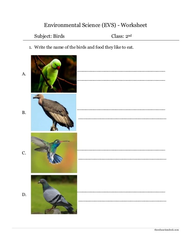 Theeducationdesk environmental science evs worksheet subject birds class nd also ii rh slideshare