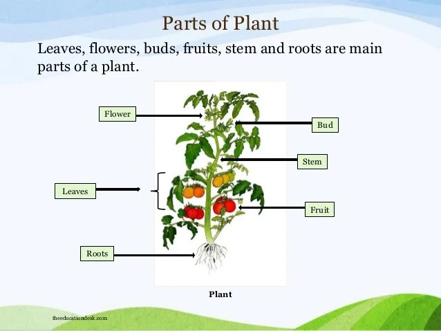 Plant also environmental science evs plants and trees class  rh slideshare