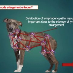 Lymph Nodes In Groin Location Diagram Kicker Solo Baric L7 Wiring Examination Of Superficial Dogs And Cat