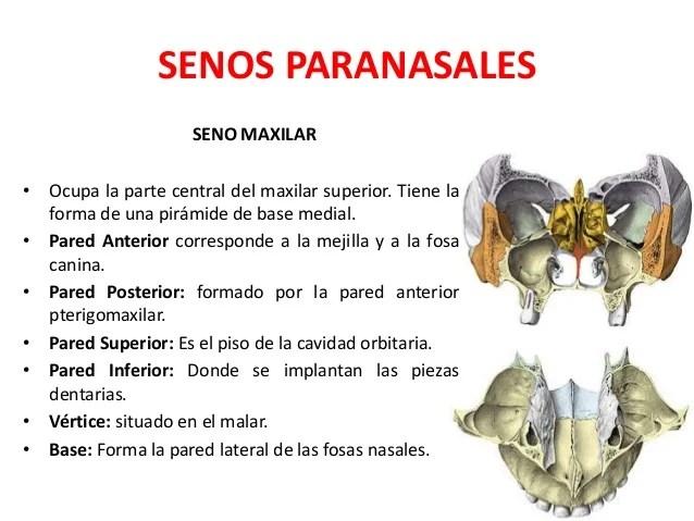Anatomia de la nariz senos paranasales y Faringe