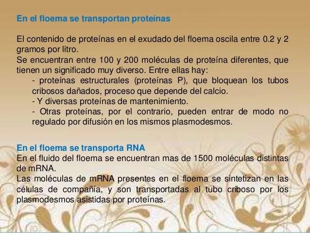 Transporte deSustancias Atraves del FLOEMA