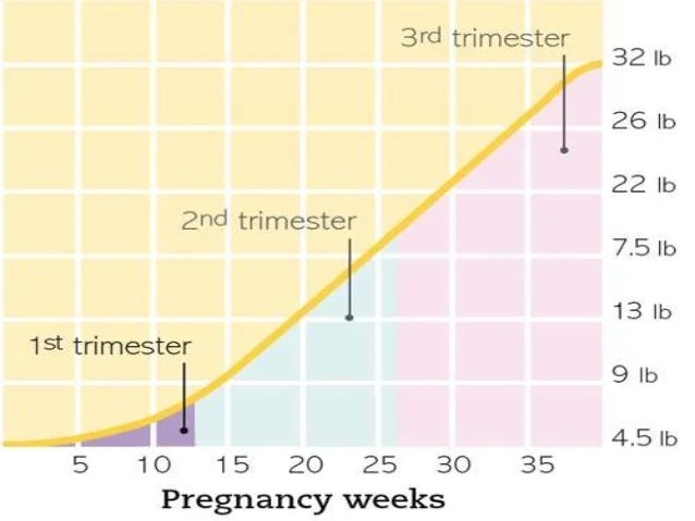 also first trimester of pregnancy rh slideshare
