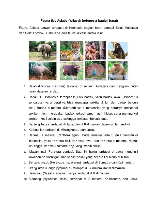 Ciri Ciri Fauna Asiatis Dan Australis : fauna, asiatis, australis, Fauna, Asiatis
