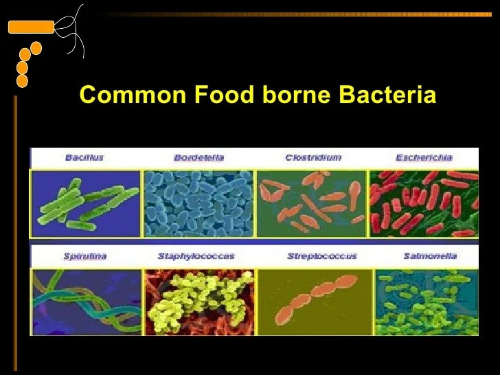 Image result for food contaminants