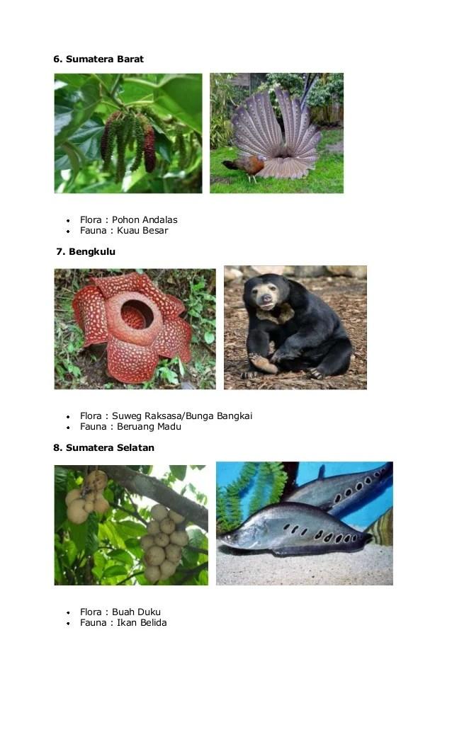Fauna Bagian Barat Dan Penjelasannya : fauna, bagian, barat, penjelasannya, Gambar, Flora, Fauna, Bagian, Barat, Paling, Keren, Infobaru