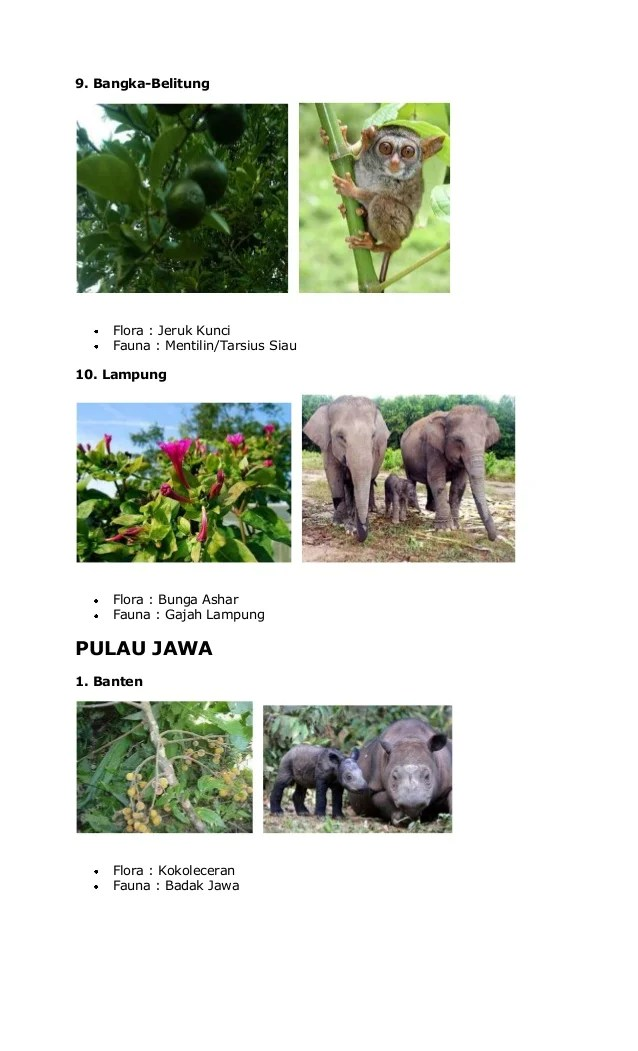 Flora dan fauna wilayah barat