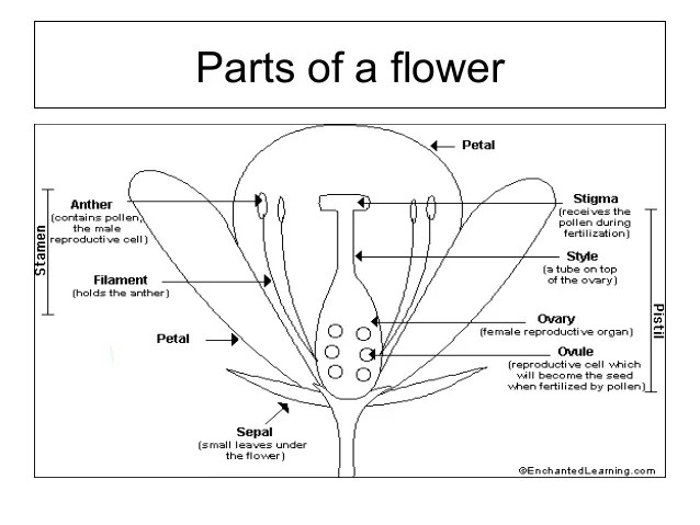 Flower structure and pollination mechanisms