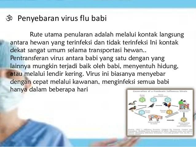 Flu babi & flu burung