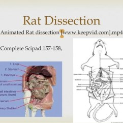 Rat Digestive System Diagram Quiz Gy6 Stator Wiring Food And Digestion Year 9 Function Of Organs 48 49 Animated