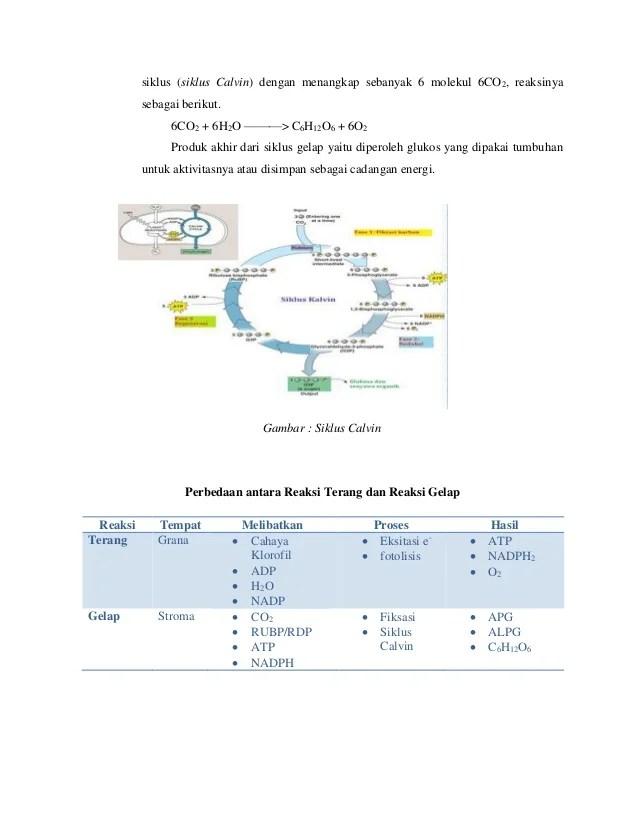 Reaksi Terang Dan Reaksi Gelap Pada Fotosintesis : reaksi, terang, gelap, fotosintesis, Fotosintesis, (reaksi, Gelap, Terang