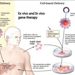 In Vivo Gene Therapy Diagram Husqvarna Lawn Tractor Parts Ex And 14