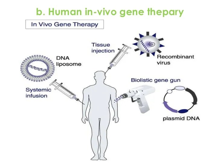 in vivo gene therapy diagram 12 volt wiring human thepary