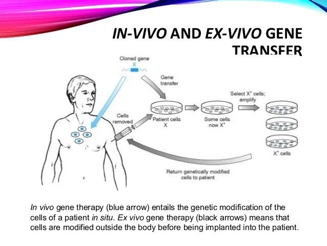 in vivo gene therapy diagram rv trailer wiring