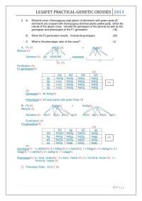 More Dihybrid Crosses Worksheet - Kidz Activities