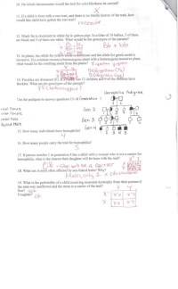 worksheet. Oompa Loompa Genetics Worksheet Answer Key ...