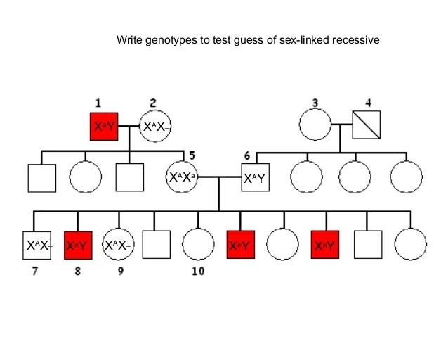 Pin Pedigree-genetics-problems on Pinterest