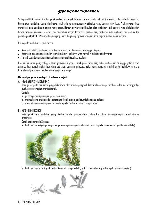 Gerak Pada Tumbuhan : gerak, tumbuhan, Gerak, Tumbuhan