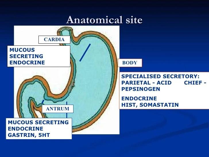Git 4th 5th Gastritis.