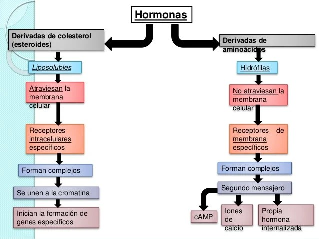 Generalidades y hormonas de la glandula hipofisis