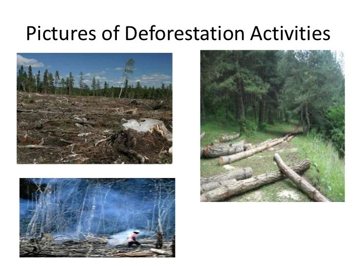Essay On Deforestation With Conclusion Articlessociology