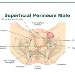 Blank Foot Diagram Baldor 5 Hp Motor Wiring Female Perineum Diagrams Lose