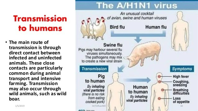 H1 N1 Current Diagnostic and Prevention Trends 2018 - 2019