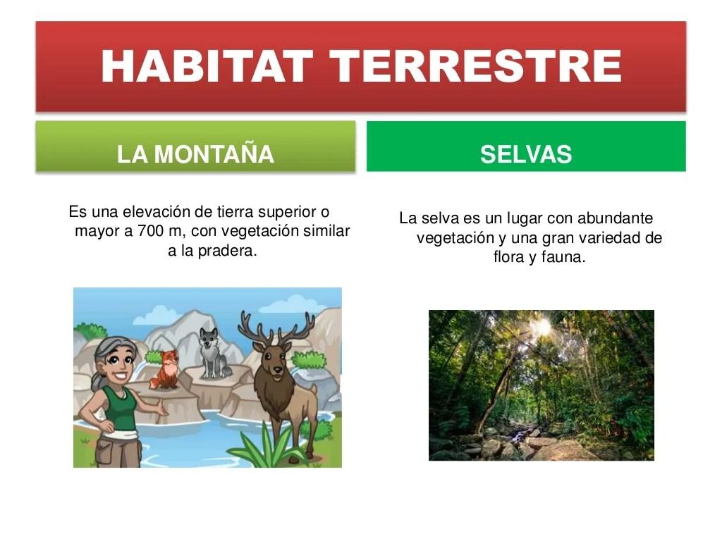 Tipos De Habitat