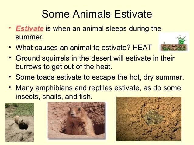 Habitats For Plants And Animals 1