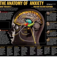 The Anatomy Of Anxiety Diagram Ford 460 Spark Plug Wire Hanipsych Stress 15