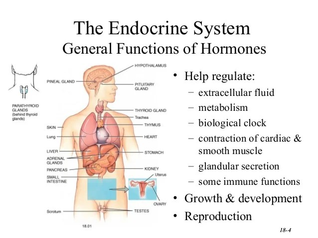 the endocrine system general functions also harmones ppt rh slideshare