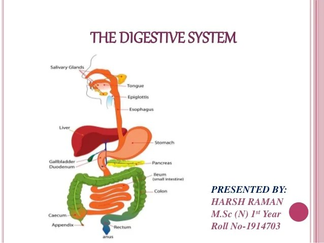 Anatomy and physiology of GI system and Diagnostic techniques