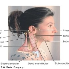 Posterior Cervical Lymph Nodes Diagram Compu Fire Ignition Wiring Location Of In Neck Behind Ear Muscle ~ Elsavadorla