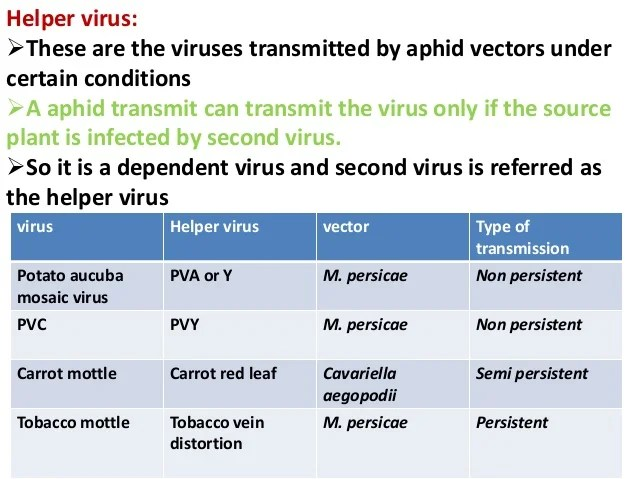 Transmission Of Plant Virus
