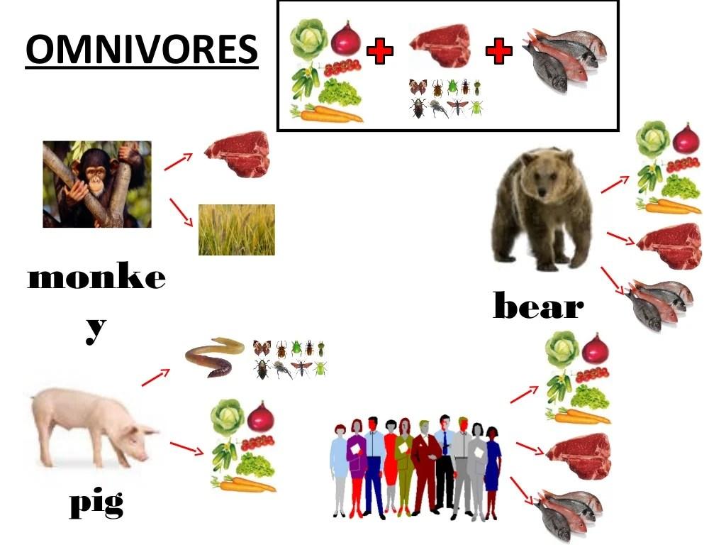 Herbivores Carnivores And Omnivores
