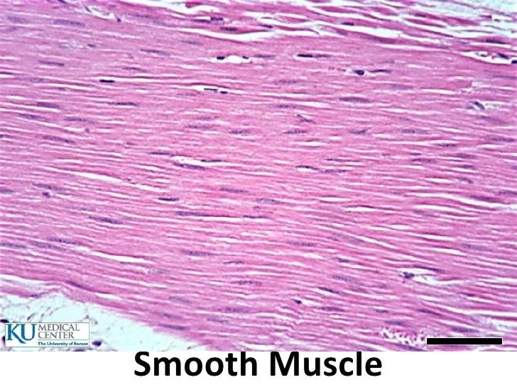 Fibrocartilage Tissue Labeled