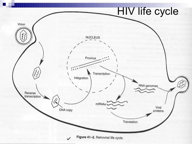 pictures and diagrams of hivaids