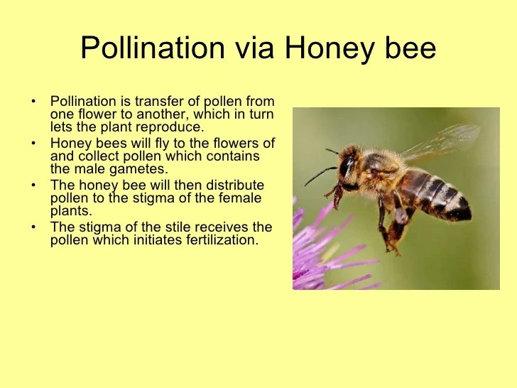 diagram of a queen bee 1998 jeep cherokee wiring diagrams pdf honey presentation final