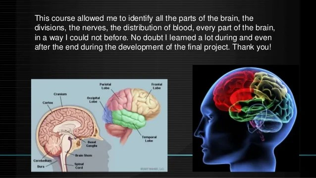 How does reading affects the brain