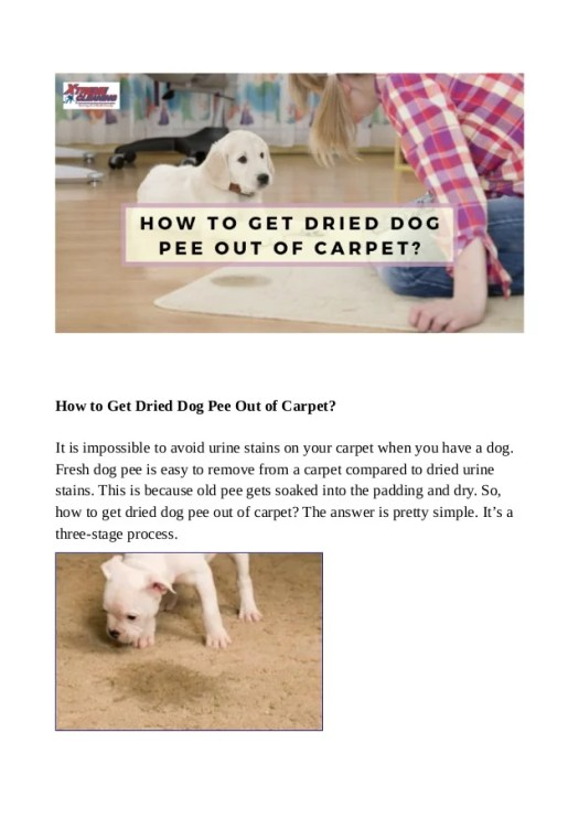 How To Find Dog Urine On Dark Carpet Lets See Carpet New