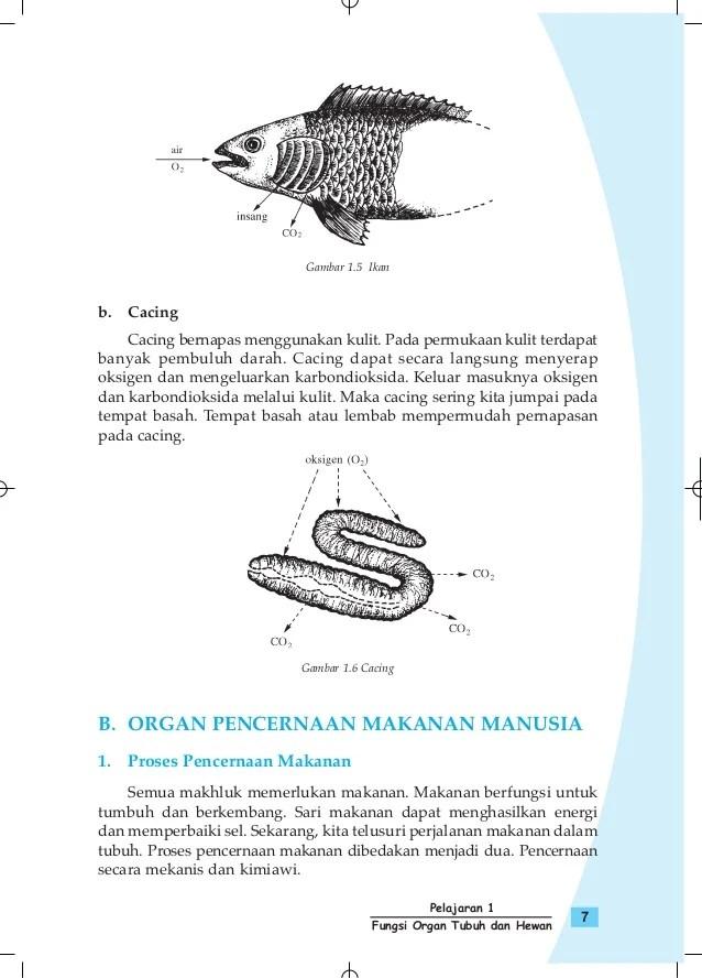 Fungsi Organ Tubuh Pada Ikan : fungsi, organ, tubuh, Gambar, Pengetahuan, Kelas, Pelajaran, Fungsi, Organ, Tubuh, Rebanas