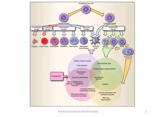 Immune deficiency. diagnostic approach