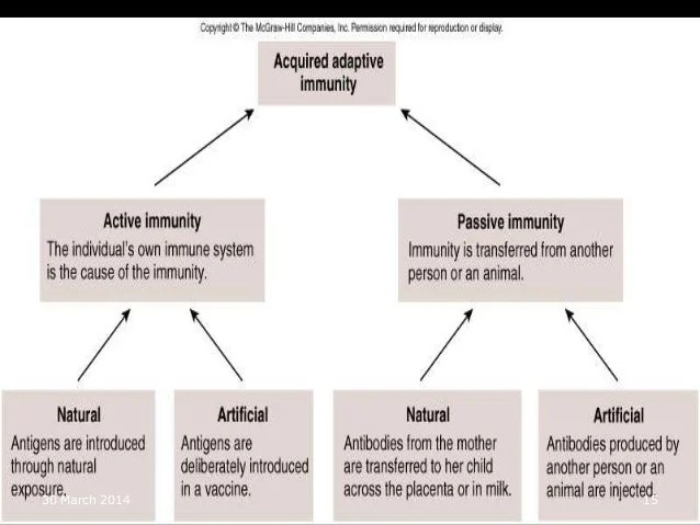 march also classification of immunity rh slideshare