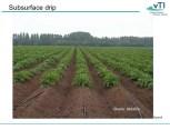 Image result for netafim drip irrigation