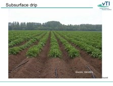 Image result for netafim drip irrigation