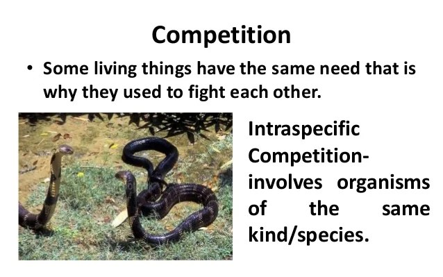 Biological Interaction